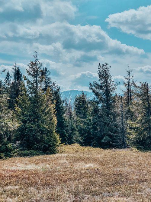 Szczyt Jałowiec w Beskidach – szlak bez tłumów